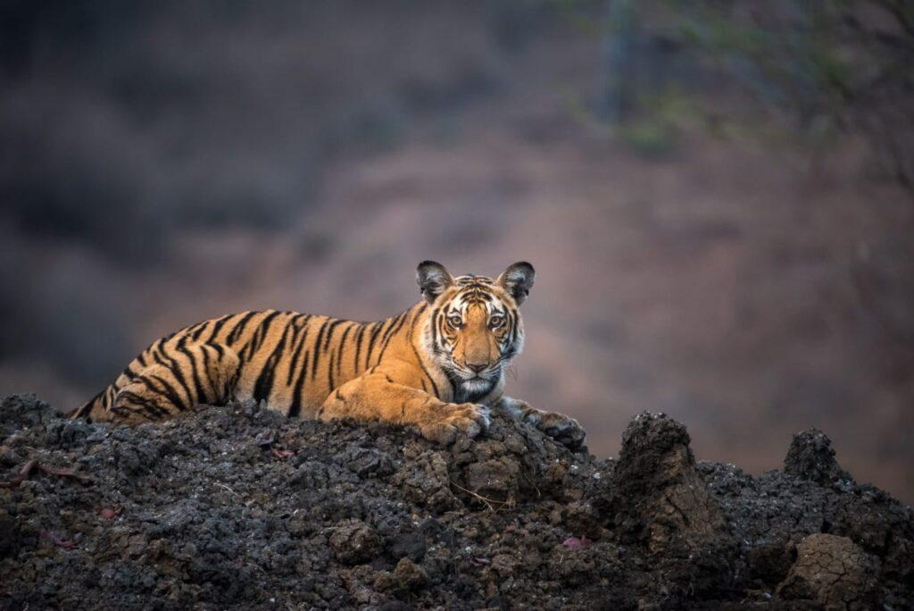 Amoghavarsha J S Wild Karnataka David attenborough Ricky Kej