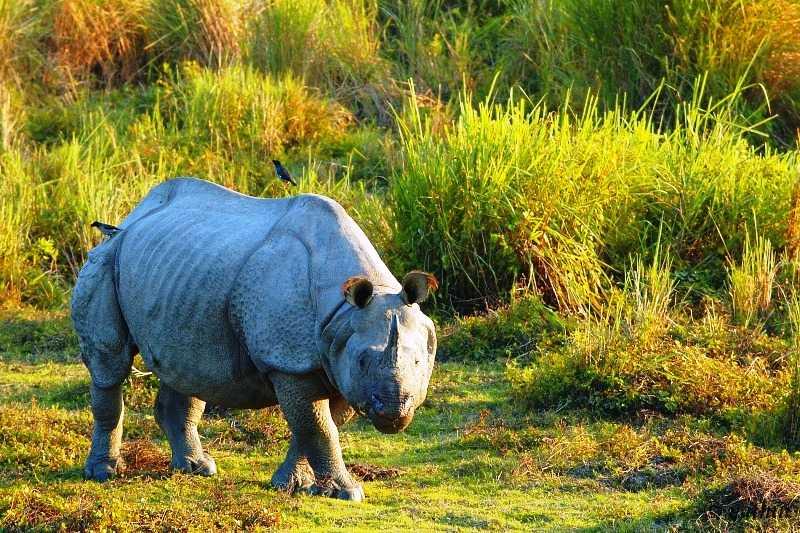 Kaziranga National Park Assam World Heritage day
