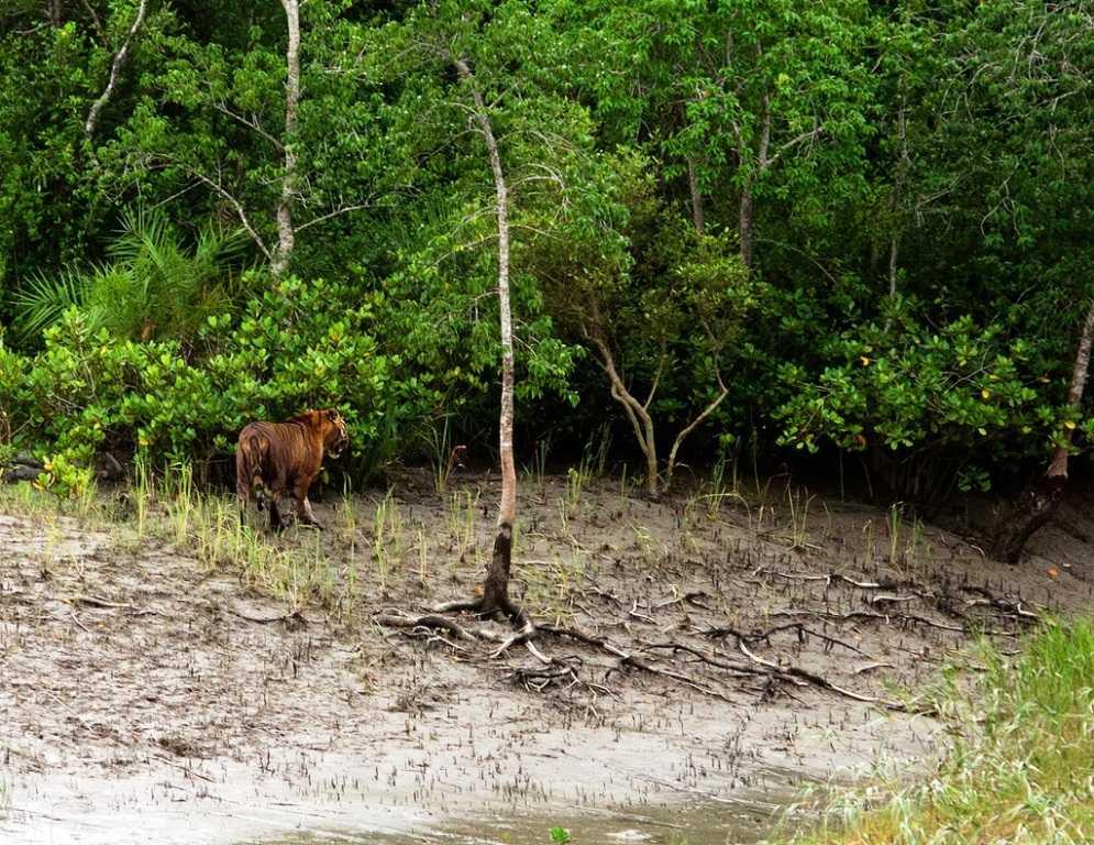 Sundarbans Ganges, Brahmaputra and Meghna Rivers Bay of Bengal. World Heritage day