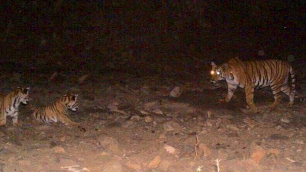 K M Abharana IFS Officer Avani Tiger shootout Sherni