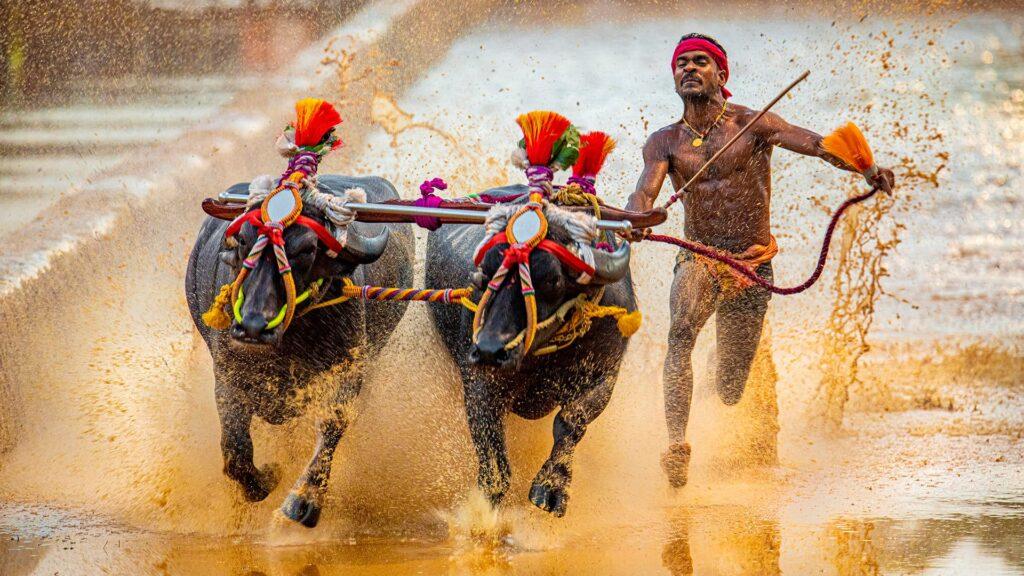 Kambala Astro Mohan Photo Journalist Photography Travelling